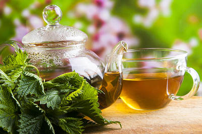 Nettle: A Healing Tea You Should Know